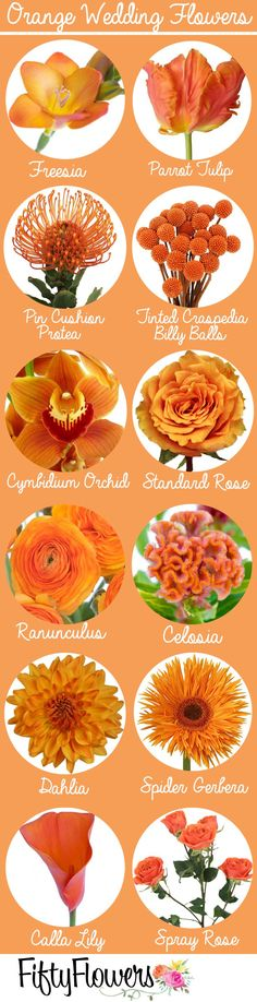 Orange is a color of happiness and life. This color looks great everywhere and can bring cheer and brightness in your garden. This color is bound to make you smile all year round because it is highly popular with spring and fall blossoms. Spring Wedding Colors, Fall Wedding Flowers, Wedding Flower Arrangements, Fall Flowers, Orange Flowers, Colorful Flowers, Floral Wedding, Floral Arrangements, Wedding Bouquets