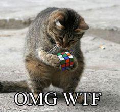 OMG WTF | CAT MACROS