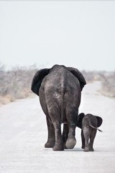 Elephants mama and baby pair.