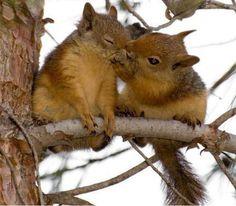 Che carini scoiattoli