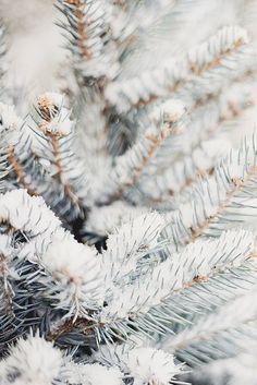 Gorgeous snowy pine tree, christmas