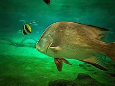 Silver Beauty - An abstract rendition of a silver colored fish moving close to a reef, but not over the reef itself. This underwater image also captures a yellow and black striped fish swimming ahead.
