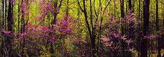 Early Spring Panorama, Albemarle County, VA