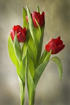 Tulipa by Jacky Parker Floral Art, via Flickr More