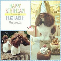 HAPPY BIRTHDAY to my darling Huxtable! You're everything a girl could ask for and more ♡♥♡