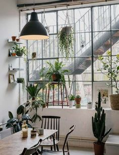 Succulents love direct sun, but if yours is sitting in same exact spot day after day, it's likely that only one side is getting enough light | archdigest.com