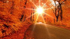 fall images and pictures, 1600x900 (550 kB)