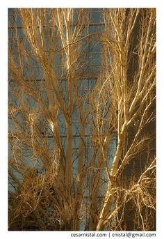 La vida es sueño | Color. Árbol. Ciudad. Mañana. Madrid