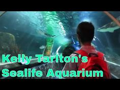 Kelly Tarlton's Sealife Aquarium, Auckland Phillip is currently in the two weeks school holidays, so we've been to some popular places in Auckland such as th. Kauri Tree, School Holidays, Auckland, New Zealand, Travel Guide, Aquarium, City, Youtube, Travelling