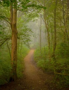 Misty path in the forest (Stoneycliffe Wood Nature Reserve, Yorkshire, England) by Aidan Mincher