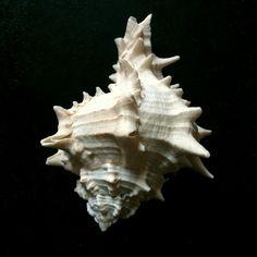#seashells