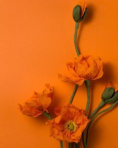 Colour experiment #papetal