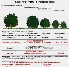 Explanation of Rootstocks - from Semi-Vigorous like M111, to Semi-Dwarfing rootstocks like M7, Geneva 30, G.41, G11, to Dwarfing rootstocks like M9, Budagovsky (Bud).9 and others.
