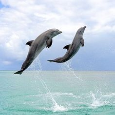 🐬⚡️⚡️⚡️ ever been so excited you felt like this ⚡️⚡️⚡️🐬 ⚡️⚡️⚡️we are⚡️⚡️🐬