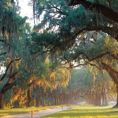 Boone Hall Plantation-S.C.-Where the Notebook was filmed!