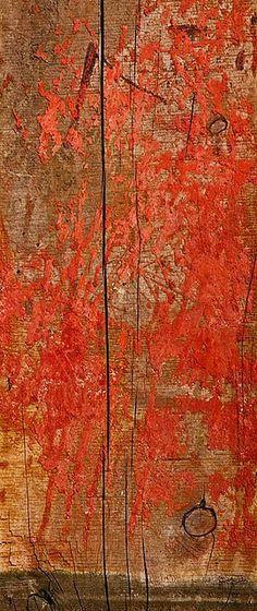 'redwood' photograph by Gillian Lindsay