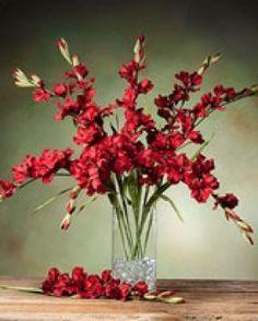 Gladiolus arrangements, Gladioli and Feathers on Pinterest