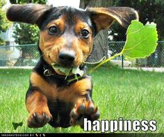Dogs certainly do equal happiness...especially flying through the air with floppy ear engaged ones
