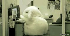 Me at work everyday… (click the image, it gets even cuter!)