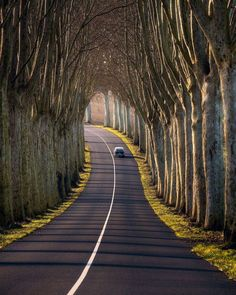 Upload Image, Strasbourg, Cool Photos, Interesting Photos, Country Roads, Nature, Beautiful, Online Earning, Trees