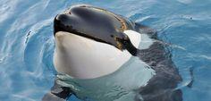 Triste - Une orque est morte au Marineland d'Antibes
