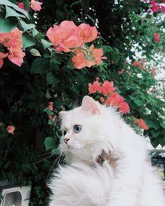 Instagram post by Salmon 🐾 • Jun 25, 2018 at 5:31am UTC Salmon Cat, Jun, Cats, Instagram Posts, Animals, Gatos, Animales, Kitty Cats, Animaux