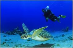 No se necesita experiencia. Buceos diarios en los Santuarios Marinos de Galapagos: GORDON ROCKS, SEYMOUR NORTH, MOQUERA, DAPHNE, SANTA FE, PLAZAS NORTE Y SUR, BEAGLE, GUY FAWKES, BAINBRIDGE, PUNTA CARRION, NAMELESS, COUSINS, BARTOLOME, FLOREANA ..…. , Salida: 07:00 Regreso: 15:00 - See more at: http://www.springtravelecuador.com/es/galapagos/348-galapagos-buceo-5d-4n#sthash.Uysu8mB8.dpuf Galápagos + Buceo 5D 4N