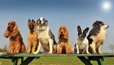 Ilyen fajta kutyára lenne szükséged a horoszkópod szerint