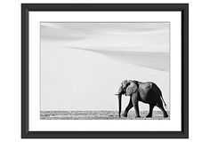 The Mighty Elephant on OneKingsLane.com