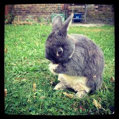Bunny has a face wash in the garden - September 7, 2012