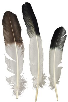 Morris Costumes Eagle Tip White Feather. Feather Drawing, Arrow Drawing, Feather Art, Feather Crafts, Feather Painting, Indian Feathers, Eagle Feathers, White Feathers, Owl Tattoo Design