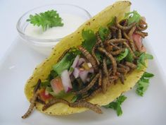 How about some tacos with pan fried worms? Despite the first reaction it was really good!