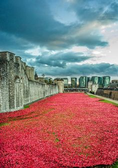 The Tower of London Poppies: Blood Swept Lands and Seas of Red. I've got one of these poppies to treasure Oh The Places You'll Go, Places To Travel, Places To Visit, Beautiful World, Beautiful Places, Amazing Places, Budapest, Parks, Photo D Art