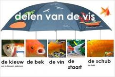 Learning Dutch - the fish The Ocean, Too Cool For School, Primary School, Spelling, Vocabulary, Projects To Try, Classroom, Letters, Teaching