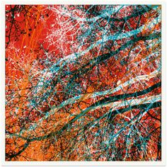 Really like this print by Chris Keegan - it has that layered branch effect that I was looking at and it uses colour in an interesting way - not true to life but not strikingly different either