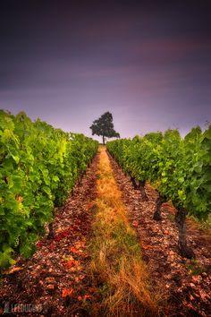 Vins Du Val De Loire By Lee Duguid On 500px