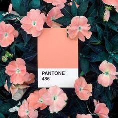 PANTONE 486 #mydailypantone #pantone