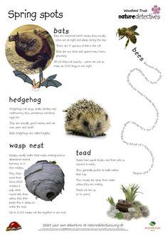 Spring Factsheet