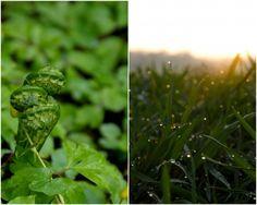 Earthsprout Fiddlehead Fern Tips