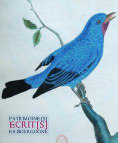 Histoire naturelle des oiseaux, par Buffon. Bibliothèque municipale de Dijon. Cote 12945. (Conception graphique et photographie : Anne Gautherot) http://www.bm-dijon.fr/