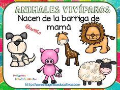 Tipos de animales claseficación (8) Cute Sheep, Cute Pigs, Teaching Activities, Teaching Science, Zoo Animals, Cute Animals, Animal Classification, First Grade Science, English Vocabulary Words