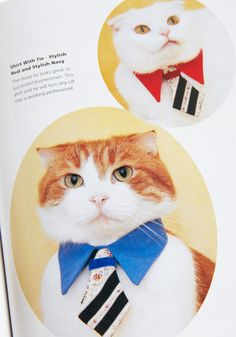 fashion cats..  its a must