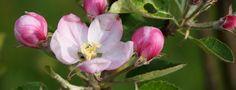 Květnové NOVINKY v klubu ŠIKOVNÉ SEVEROČEŠKY Byl pozdní večer – první máj –večerní máj – byl lásky čas....... ......kdo by neznal Máchův Máj...rozkvetly stromy ,květiny... měsíc květen je právem považovaný za nejkrásnější měsíc v roce. Podívejte se na novinky, které vznikly v májovém čase .Srdečně vás zveme k nahlédnutí a nákupu. Malá ukázka, ve ...