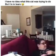 Machine learning meets trending news, viral videos, funny gifs, and so much more. Cute Cat Memes, Funny Animal Memes, Funny Animal Pictures, Cute Funny Animals, Funny Relatable Memes, Cute Cats, Cat Memes Hilarious, Funny Vid, Funny Cat Videos