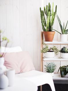 we love cactus! |Casa Atelier blog|