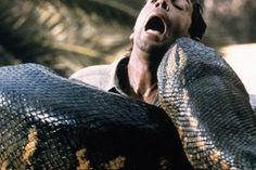 worlds-largest-snake-attacks