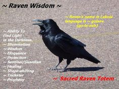 A Little Raven Wisdom – Witches Of The Craft® Raven Spirit Animal, Animal Spirit Guides, Raven Totem, Raven Art, Animal Meanings, Animal Symbolism, Raven And Wolf, Quoth The Raven, Libra