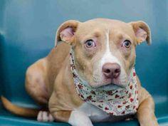 #URGENT  #Founddogs 11-14-14 #Medley #FL URI (Upper Respiratory) Easily treatable MIAMI DADE ANIMAL SERVICES