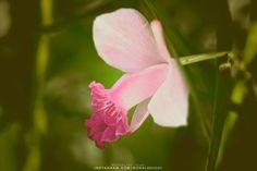 A maioria dessas fotos de 2012 são de um jardim onde eu trabalhava. Eu passava horas e horas no estudio fotográfico e de vez em quando descia no jardim para um café. Era bonito por isso tem tanta foto de lá. ______  #primavera #spring #flowers #flower #flores #photography #nature #natureza #fotografia #fotografo #photographer #intagramers #lightroom #adobe #daily #ronaldoichi #sony