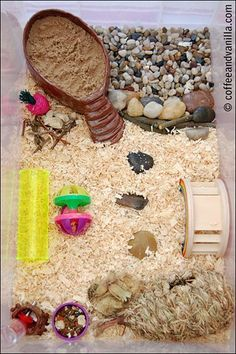 hamster playground with DIY clay sand bathtub and water bottle holder - Hamsters Teddy Hamster, Diy Hamster Toys, Cool Hamster Cages, Gerbil Cages, Hamster Life, Hamster Habitat, Dwarf Hamster Toys, Robo Dwarf Hamsters, Hamster Stuff